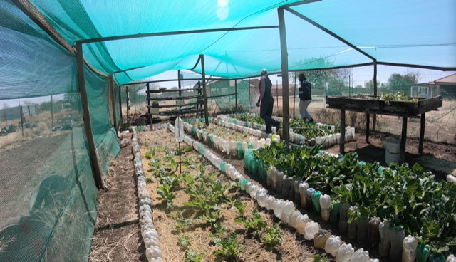 Food and agriculture program